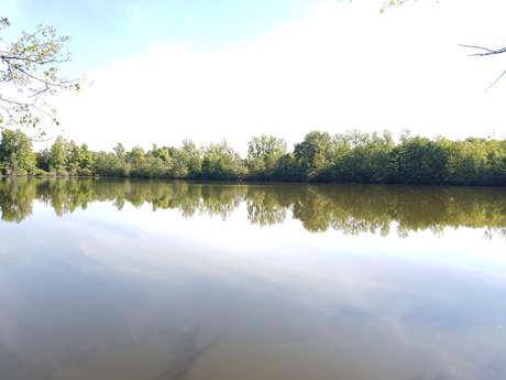 Domaine de Reugny - Étang de pêche à la carpe