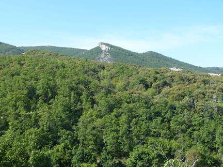 Forêt départementale