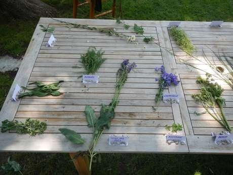 Rando Cueillette A la découverte des plantes sauvages comestibles