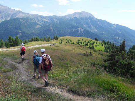 Randonnée - Accompagnateurs en montagne du Champsaur