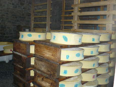 Local Cheese factory