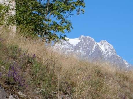 Sortie Fossiles et archéologie : l'Alpe de la Rouya
