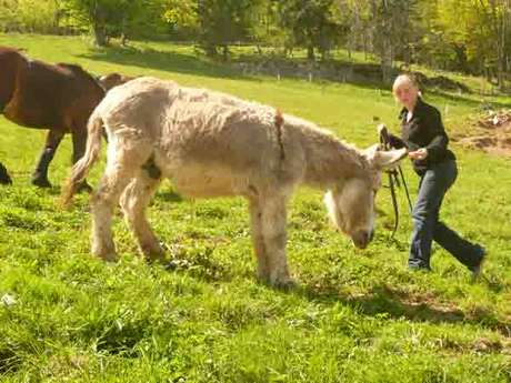 Ride on the Bellevaux path with a donkey foal