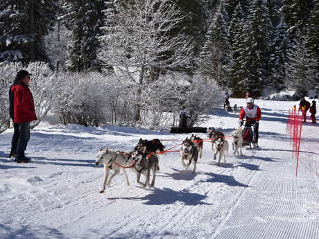 Conta Musher Race : Championnats de France de course de chiens de traineaux