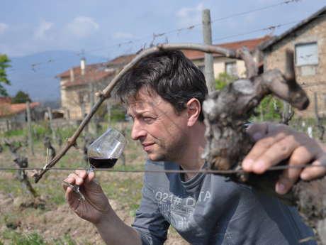 Ouverture estivale du dimanche Vignobles Verzier