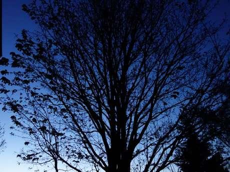 """Les rendez-vous de mon Parc """"A la découverte de la nature, la nuit """""""
