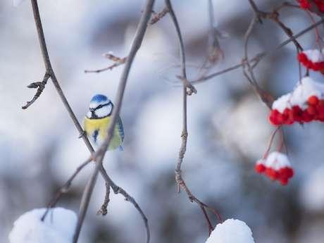 Nordic café : Découverte de la nature en hiver