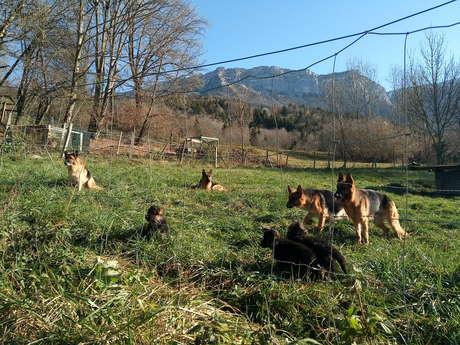 Pension canine - élevage des Seigneurs de Montbel