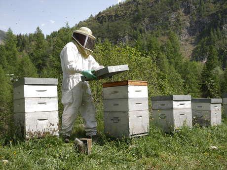 Les Abeilles de Luc - L'apiculteur d'Orcières
