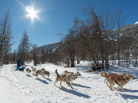 """Mushing Addict"" dog sleighing"