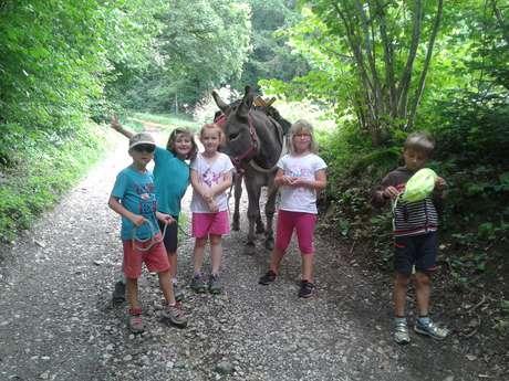 Anniversaire - Balades et randonnées avec ânes au