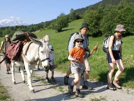 Hiking with donkeys