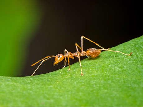 Exposition-animation sur les fourmis