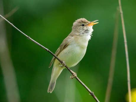 Sortie d'observation et d'écoute des oiseaux