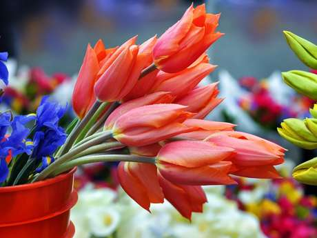 Marché aux Fleurs et Végétaux à Saint Goussaud