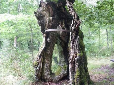 L'arbre du Loup