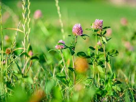 Le Pâtural fleuri