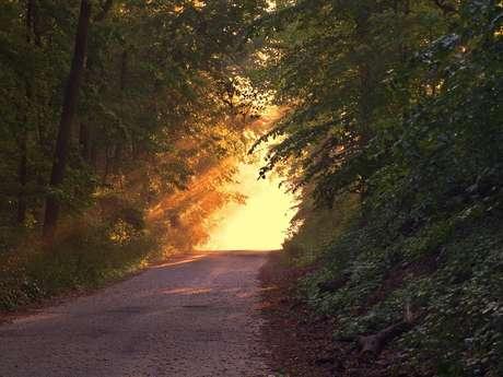 Circuit de randonnée : Les Eaux Bois