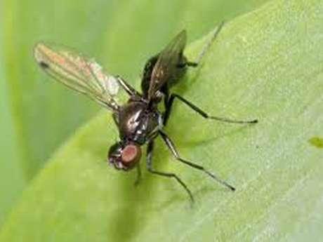 Exposition et concours photo sur les insectes