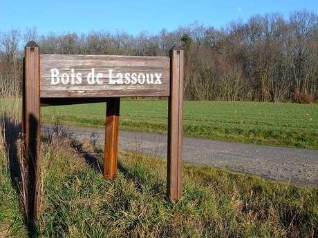 Pique-nique dans le Bois de Lassoux