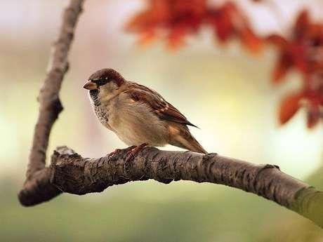 A la découverte des oiseaux hivernants