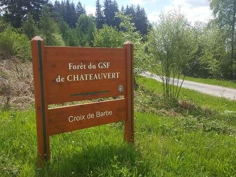 La forêt de Châteauvert