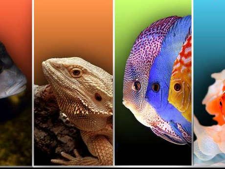16e Salon azuréen d'aquariophilie et de terrariophilie