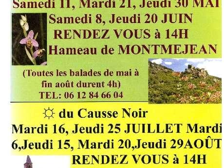 Sorties découvertes du sentier botanique René Pical à Montméjean, la flore du Causse Noir
