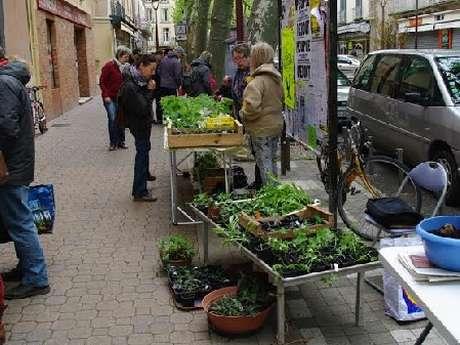 Troc jardinier de graines, fleurs et plants du Club Jardin de la MJC de Millau