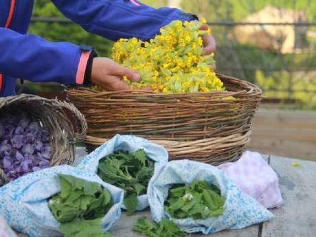Stage Les plantes sauvages comestibles en famille (SolStisse)