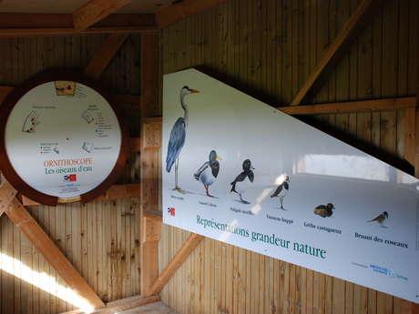 Les oiseaux hivernants du domaine de Careil