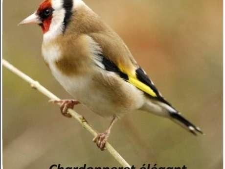 Observation des oiseaux avec Perche Nature