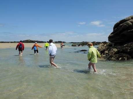 Sorties et balades à pieds commentées sur les îles Chausey