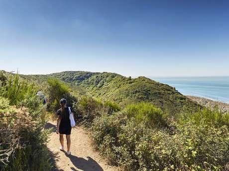 Les richesses naturelles des falaises de Carolles