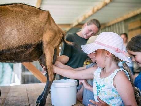 Chèvres et fromages à la ferme de la Chèvre Rit
