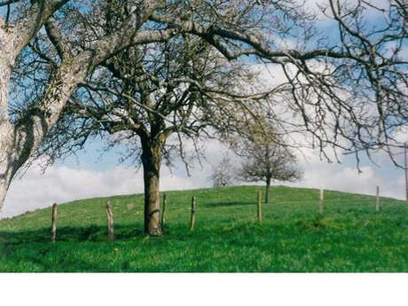 Châtellier castle mound