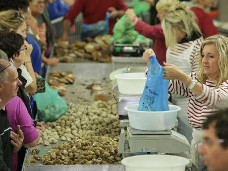 Festival des coquillages : Toute la Mer sur un plateau