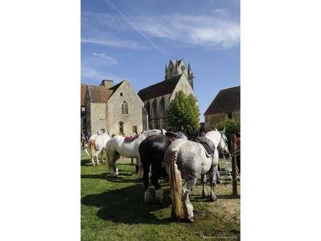 Fête du cheval percheron : Percherons de Vanoise