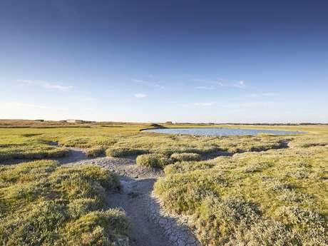 Découvrons les algues de la laisse de mer
