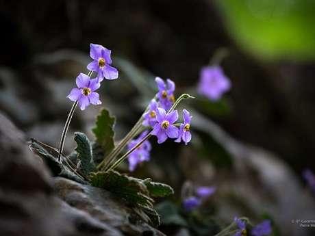 """Sortie montagne du Parc national """"La flore dans le Cirque de Gavarnie"""""""