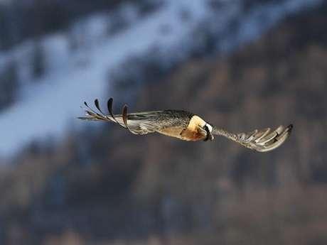 """Animation du Parc national des Pyrénées - """"Les oiseaux d'altitude"""""""