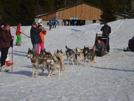 BALADES A TRAINEAUX A CHIENS - MUSHING PYRENEES