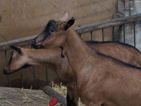 Les chèvres de Noémie : fromages de chèvre