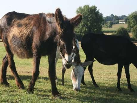 Aire de stationnement privée Au paradis des ânes du Pays d'Auge