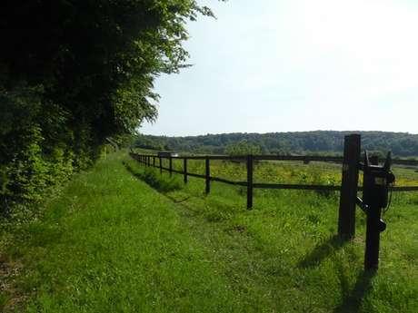 Aux portes du Pays d'Auge - 16km - Départ : Saint-Pierre-en-Auge (Boissey)