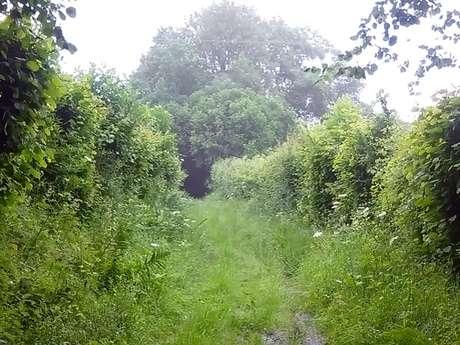 Le ruisseau du Moulin de Bailleul - 8,5km - Départ : Coquainvilliers