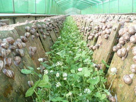 Visite guidée de la ferme hélicicole bio Cap'Hélix Escargots