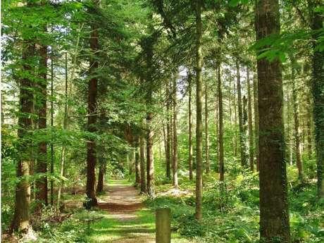 La forêt de Montfort