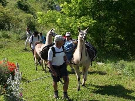 Promenade avec La ferme des lamas