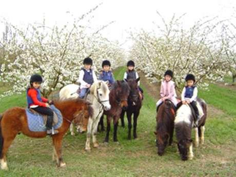 """Equestrian farm """"Le Cèdre"""""""